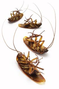Cockroach Extermination in Saint Albans